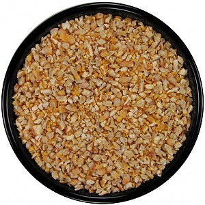 cracked corn seed for birds