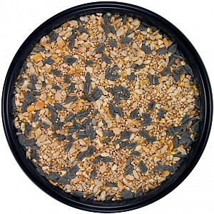 cheap wild bird seed